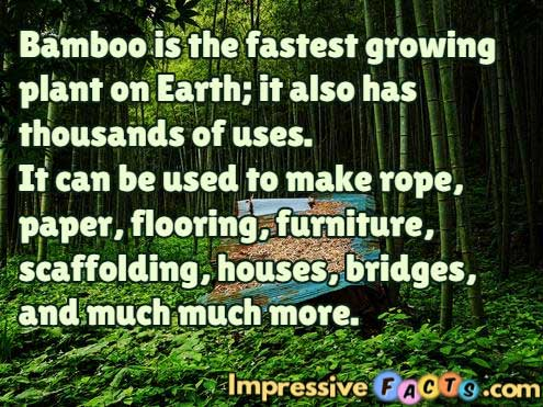 Bamboo is the fastest growing plant on Earth.