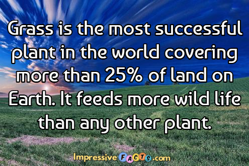 Grass is the most successful plant in the world covering ...