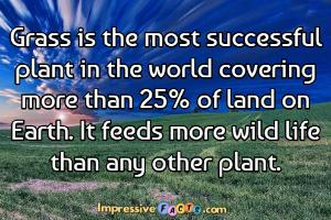 Grass is the most successful plant in the world covering more than 25% of land on Earth.