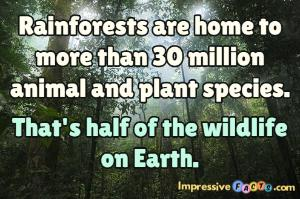 Rainforests are home to more than 30 million animal and plant species.  That's half of the wildlife on Earth.