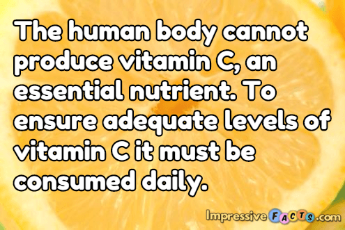 The human body cannot produce vitamin C, an essential nutrient.